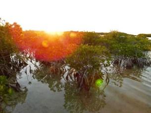 Coucher de soleil sur Big Pine Key