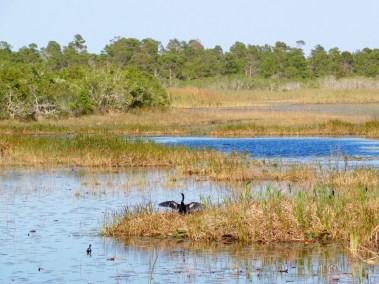 Savannas Preserve State Park / Fort Pierce / Floride