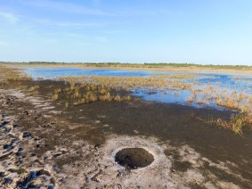 Savannas Preserve State Park / Fort Pierce / Floride