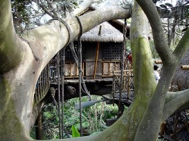 Disney'Animal Kingdom