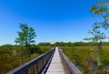 Photo of Visiter les Everglades : les 7 endroits à voir absolument dans les marais de Floride