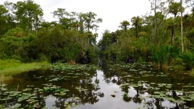 Photo of Un réservoir à 1 milliard de dollars pour nettoyer les Everglades