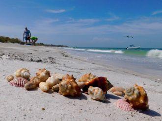 Plage de l'île d'Egmont Key au large de St Petersburg en Floride