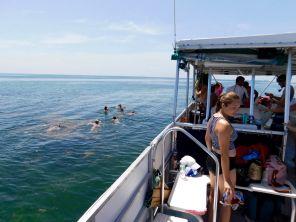 Snorkeling et plongée sur l'île d'Egmont Key en Floride