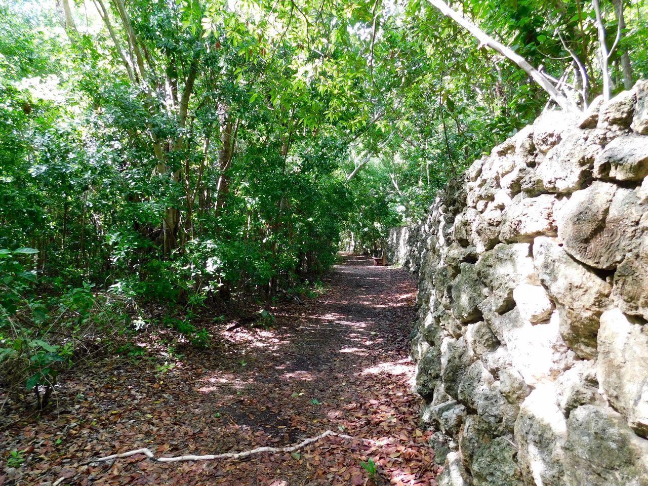 Hammock Botanical State Park de Key Largo