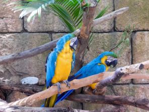 Zoo de Palm Beach en Floride