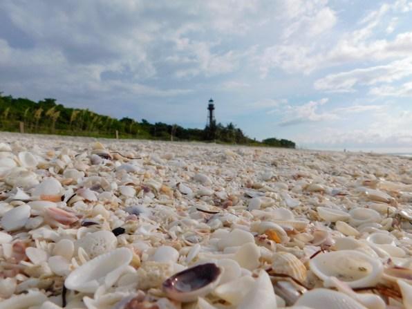 Phare et coquillages sur la plage de Sanibel Island Lighthouse Beach Park (Floride)