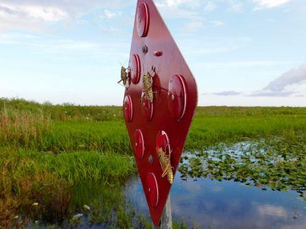 Sauterelles dans les Everglades (Floride)