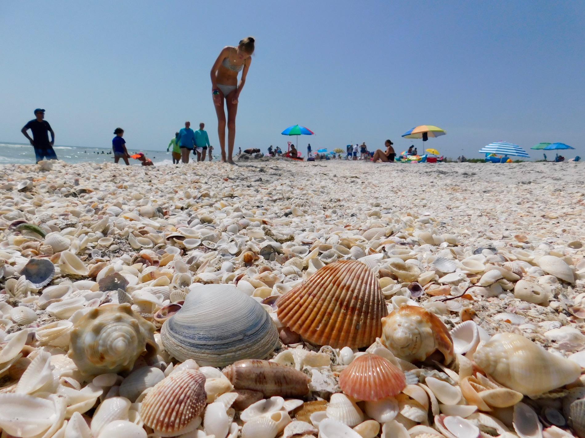Coquillages sur la plage de Bowman's Beach sur l'île de Sanibel (Floride)