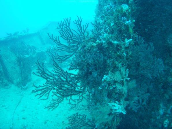 Neptune Mémorial Reef