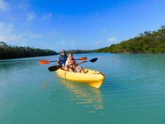 Kayak dans la mangrove sur l'île d'Islamorada dans l'archipel des Keys de Floride