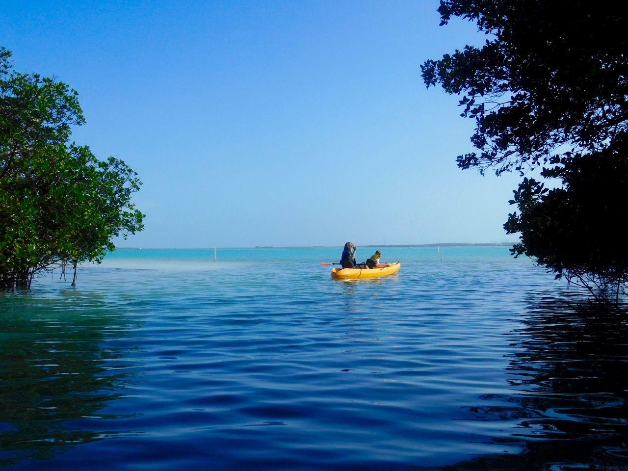 Mangrove sur l'île d'Islamorada dans l'archipel des Keys de Floride