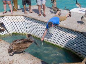 Nourrir les tarpons, c'est ce qui a rendu célèbre Robbie's Marina, à Islamorada dans l'archipel des Keys de Floride