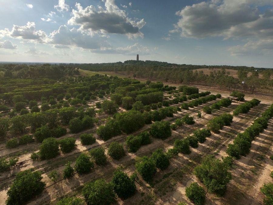 Plantations d'orangers près de la Bok Tower, dans le Polk County (au sud d'Orlando)
