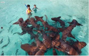 Les Exumas - Requins