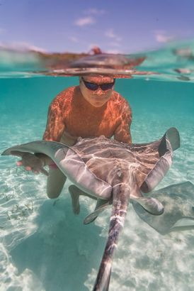 Bahamas Stingray City - Raie Pastenague