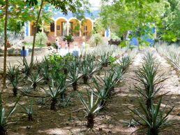 Musée du Chocolat d'Uxmal / Yucatan / Mexico
