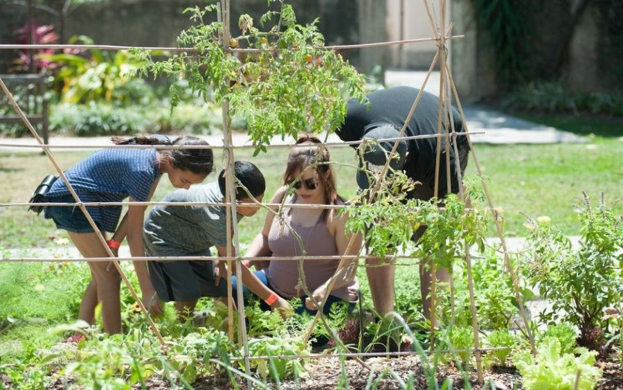 Family Program : Kitchen Botany à Miami