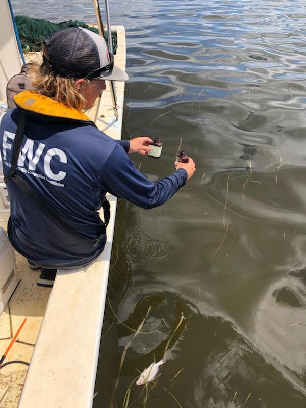 La FWC analysant l'eau de la mer durant la marée rouge (red tide) en Floride.