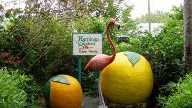 Photo of Flamingo Gardens de Davie : pour découvrir les plantes et animaux de Floride