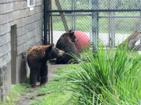 Ours au Zoo de Miami