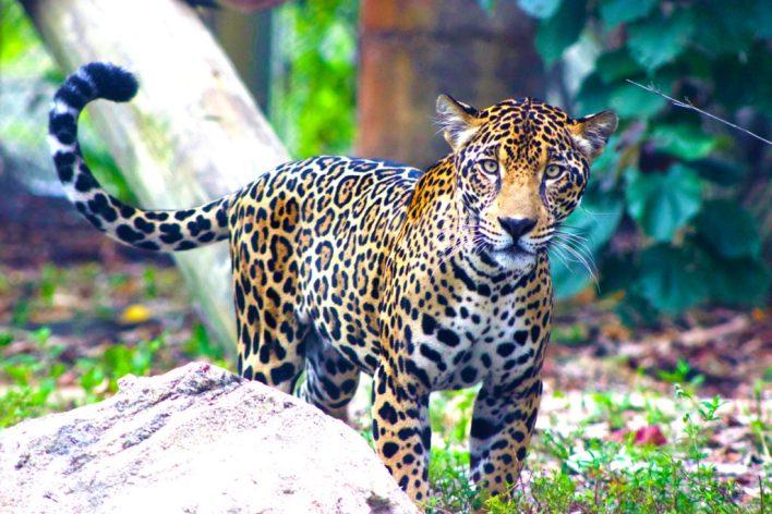 Elle c'est Fiona : la copine de Zooka au zoo de Palm Beach