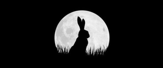Watership Down (saison 1)