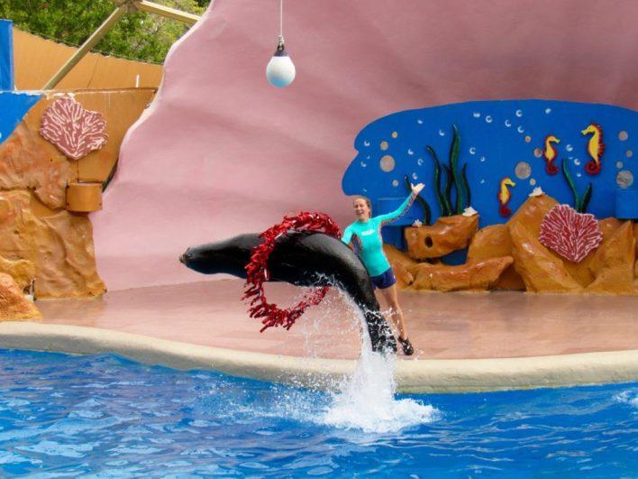 Le spectacle des phoques au Miami Seaquarium