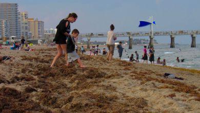 Photo of Floride : La côte atlantique sud envahie par les algues sargasses