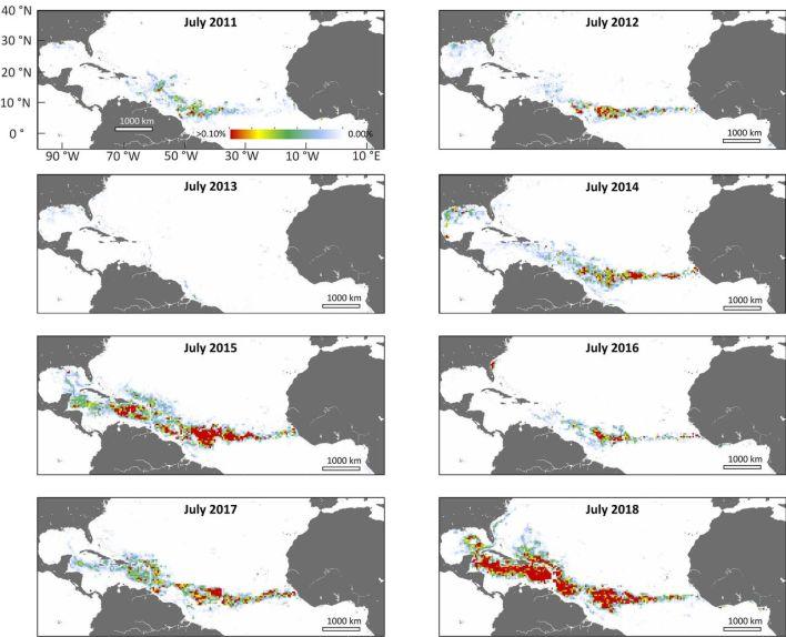 Le développement des sargasses dans la Caraïbe