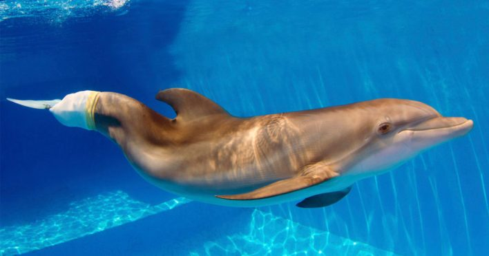 Winter le dauphin dans son bassin