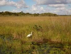 Paysage à Anhinga Trail Royal Palm (Flamingo -Everglades national Park)