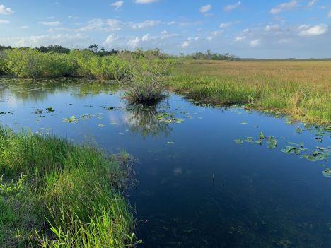 Paysage à Anhinga Trail (Flamingo -Everglades national Park)