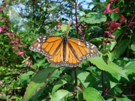 Papillon aux Jardins Botaniques de Naples / Floride