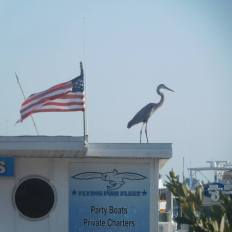 Front de Mer de Sarasota / Floride