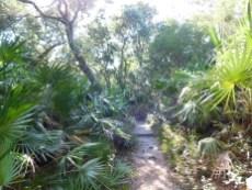 Chemin de randonnée au Anastasia Island State Park