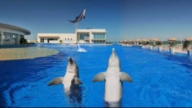 Nager avec les dauphins au Marineland de St Augustine