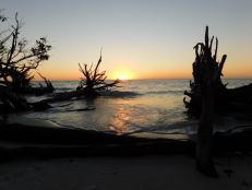Coucher de soleil sur les squelettes d'arbres sur la plage nord de Longboat Key / Floride