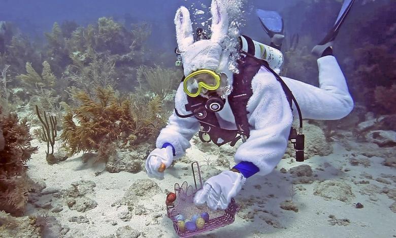 Chasse à l'œuf sous-marine dans les Keys de Floride