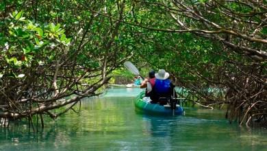 Photo de Canoë et kayak en Floride : les plus beaux endroits pour en faire à Miami et ailleurs