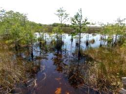 Le parc Grassy Waters Preserve de West Palm Beach