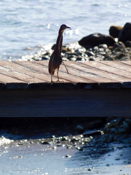 Peanut Island, près de West Palm Beach en Floride.
