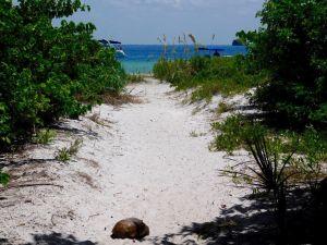 Tortue sur Egmont Key au large de St Petersburg en FlorideTortue sur Egmont Key au large de St Petersburg en Floride