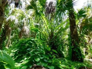 Chemin de randonnée près du Rookery bay Environnemental Learning Center (à Naples en Floride).