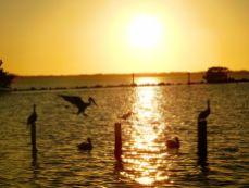 Pinelanf, village de pêcheurs sur l'île de Pine Island (près de Fort Myers en Floride)
