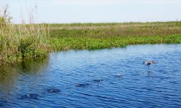 Lake Okeechobee à Moore Haven en Floride