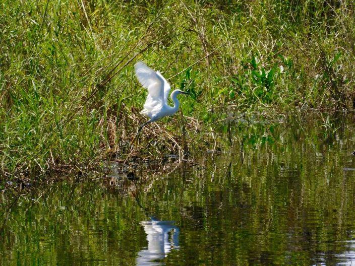 Oiseau sur le Lake Okeechobee à Moore Haven en Floride