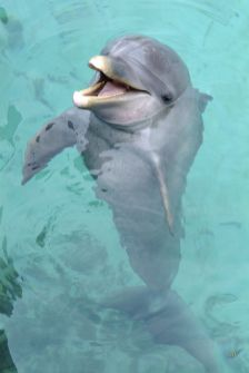 Bahamas - Dauphins