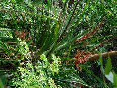 Le cenote près de la pyramide d'Ek Balam (au Mexique)