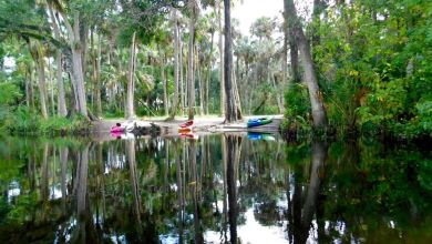 Photo de Loxahatchee River : la plus belle rivière du sud de la Floride